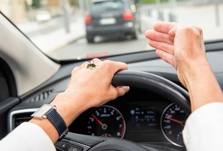 Wespe im Auto: Was passiert bei einem Unfall? – Versicherung ersetzt den Schaden