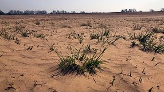 Extreme Trockenheit: Die Mini-Sahara von Brandenburg