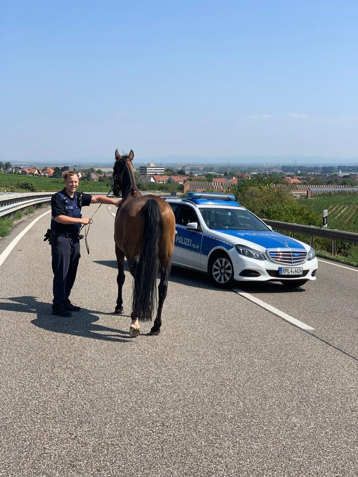 A6: Freilaufendes Pferd auf der Autobahn