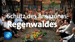 Pakt zum Schutz des Amazonas-Regenwaldes geschlossen