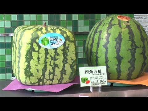 Skurrile Melonen: Quadratisch, praktisch, japanisch