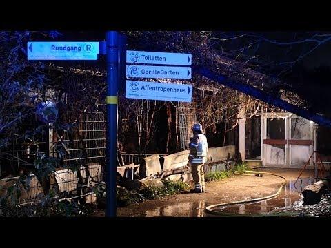 Feuer im Zoo Krefeld alle Tiere im Affenhaus haben