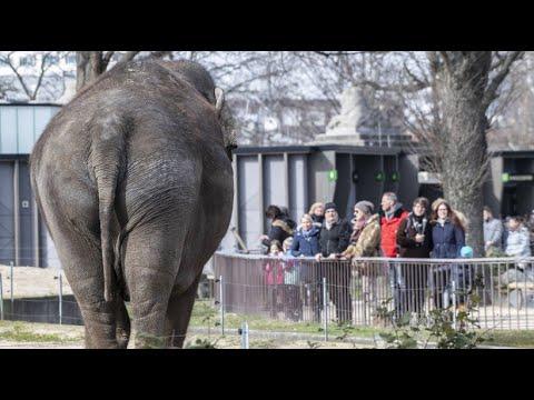 Mit Einschränkungen: Zoo und Tierpark Berlin wieder geöffnet