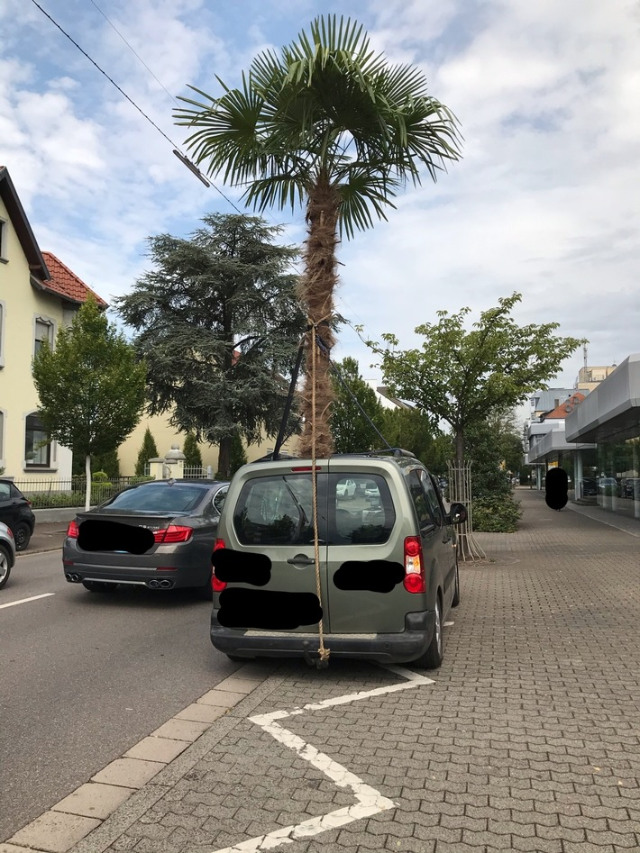 Saarlouis: Polizei stoppt Pkw mit Palme
