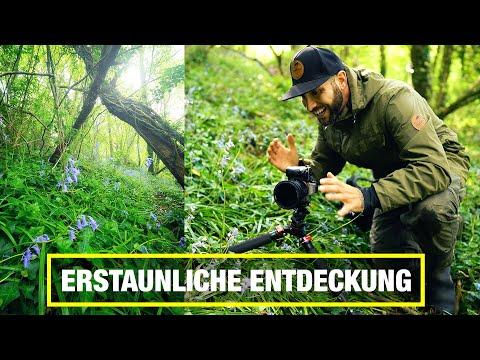 Fotografieren im Wald: Erstaunliche Entdeckung