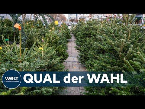 HEILIG ABEND: Das sollten sie beim Weihnachtsbaumkauf beachten